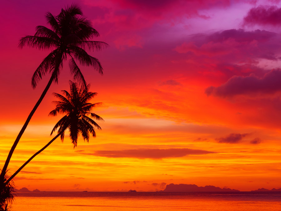 Holiday Sunset Removable Wall Stickers And Wall Decals