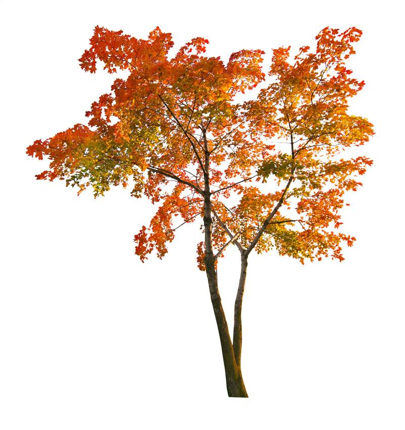 autumnal tree wall sticker